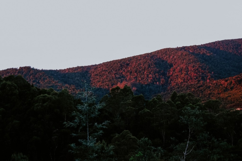 Landscape with trees: Here's what the climate crisis needs from us
